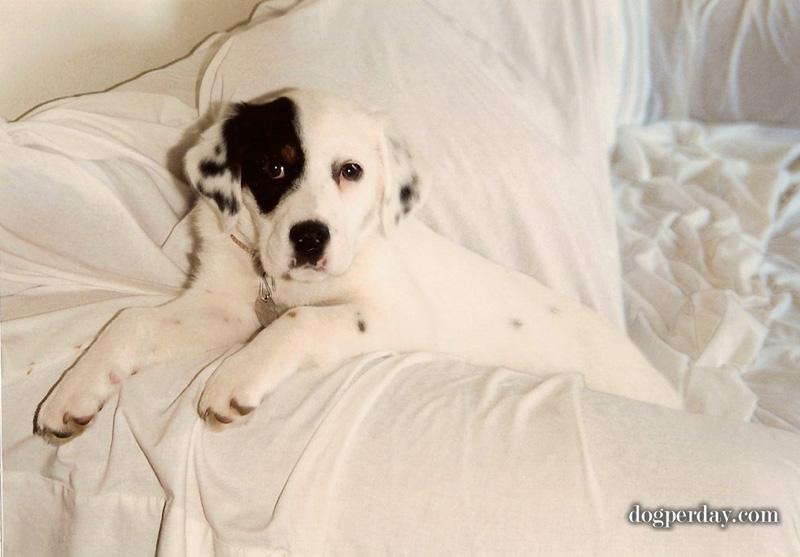 abby-puppy