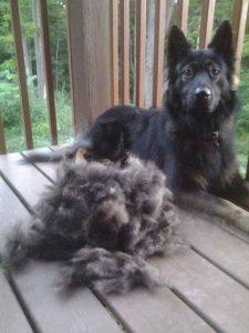 PawsPamper Undercoat Rake Shedding Brush