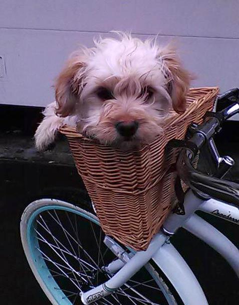 Simon the Terrier Mix