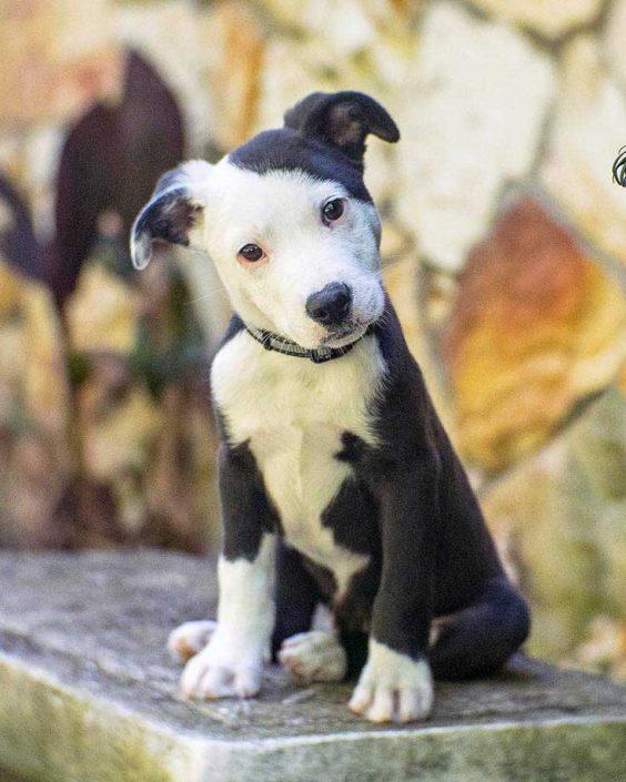 Snoop Dog the Border Collie, Terrier Mix