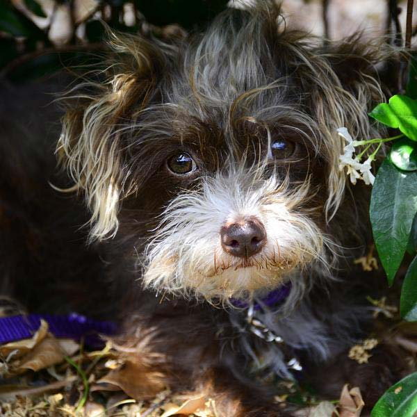 Star the Terrier Mix
