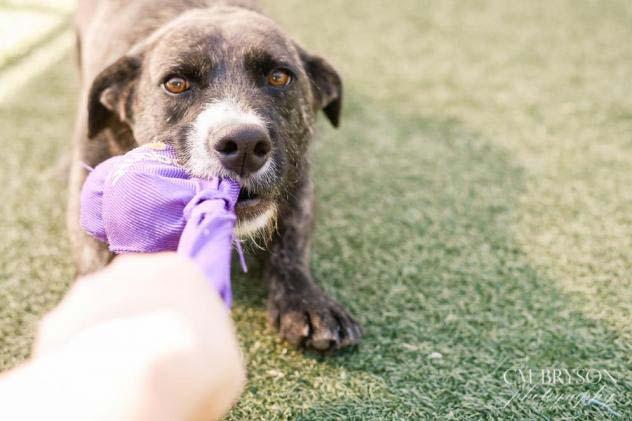 DeVito the Terrier, Basset Hound Mix