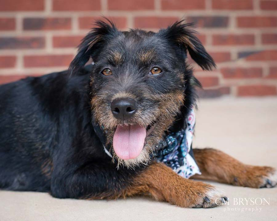 Mindy the Terrier Mix