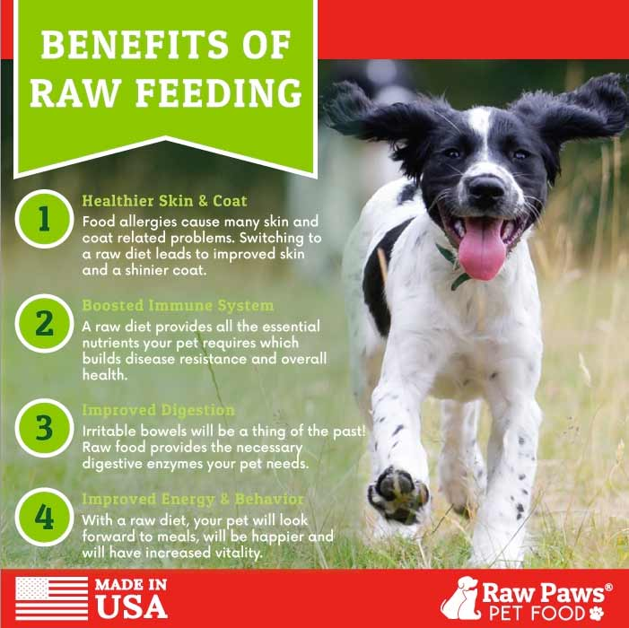 Benefits of Feeding Raw Food