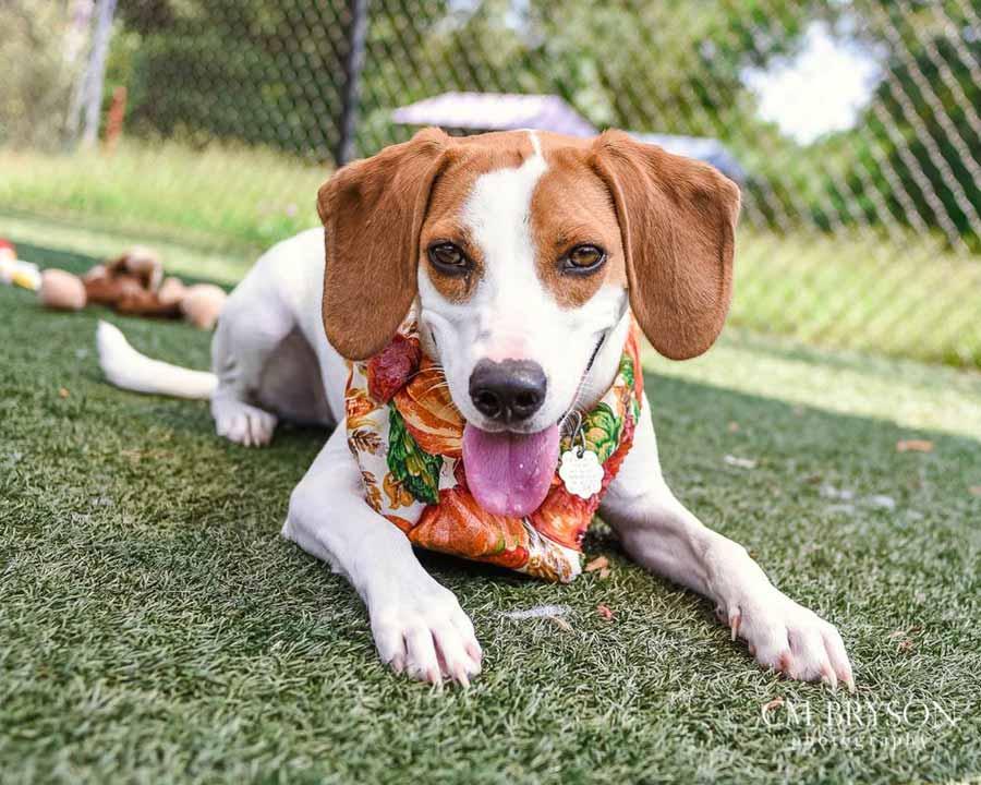 Saucony the Beagle Mix