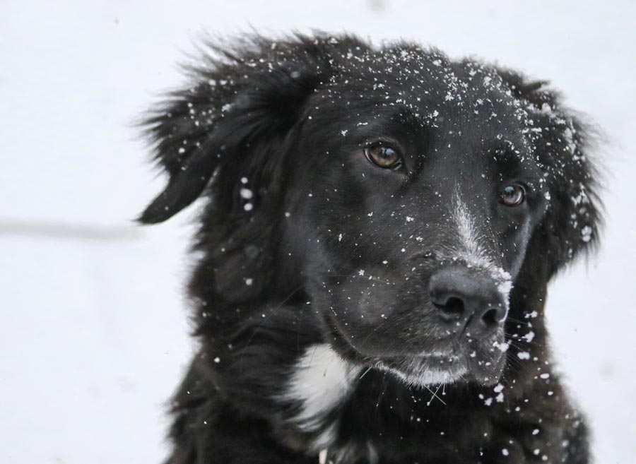 5 Practical Ways To Keep Your Dog Healthy and Happy This Winter