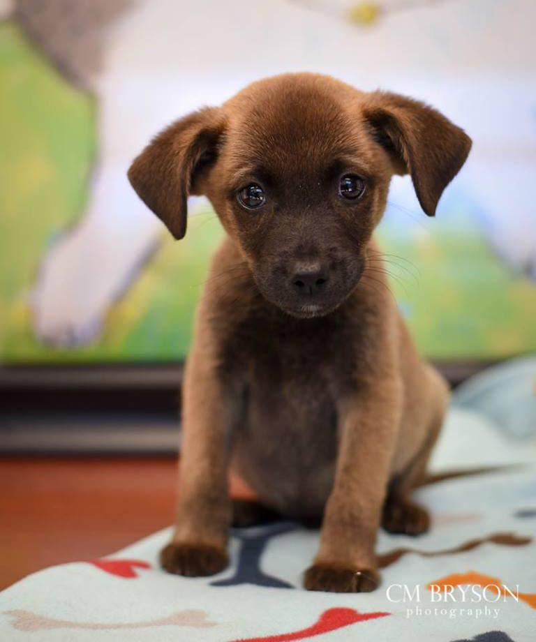 Chipmunk the Spaniel, Terrier Mix