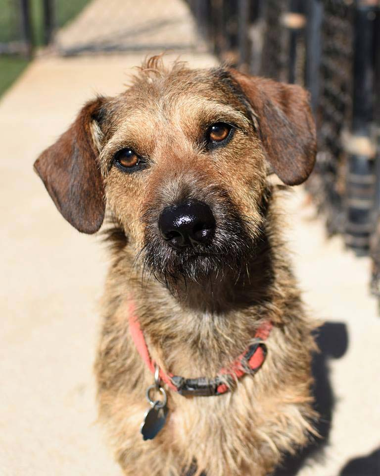 Max the Terrier Mix