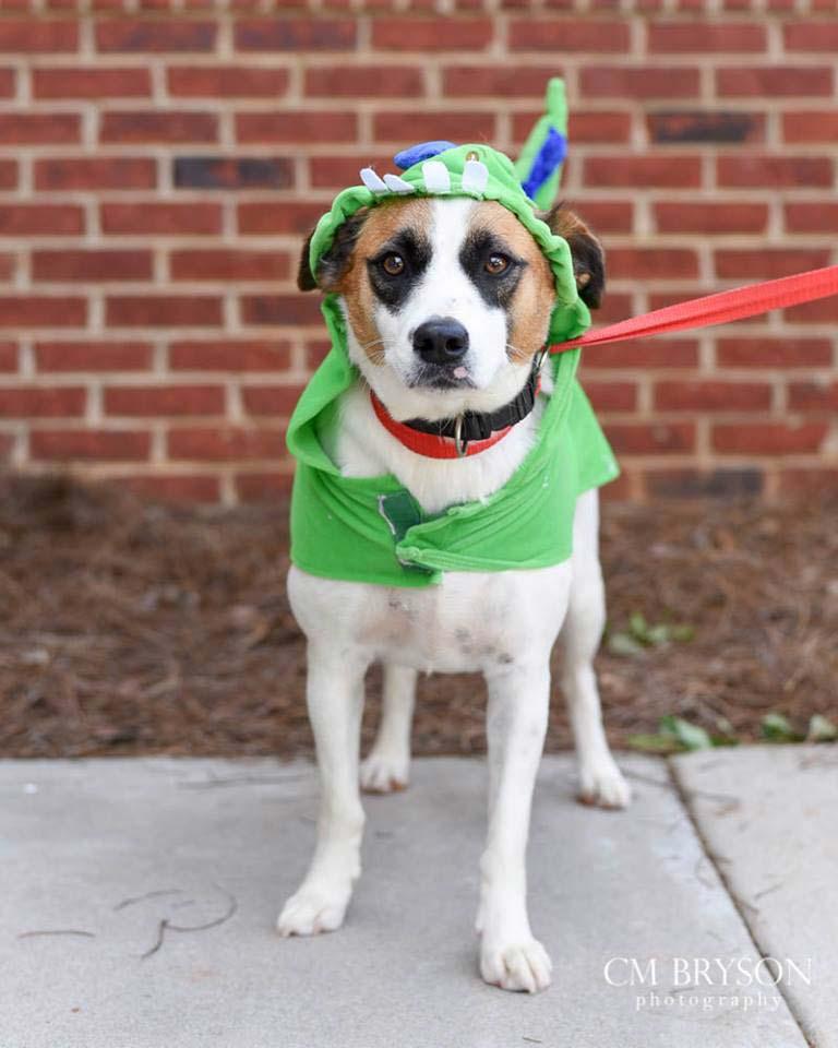 Tess the Beagle Mix