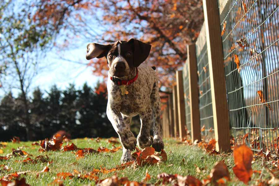 Dog in the Fall