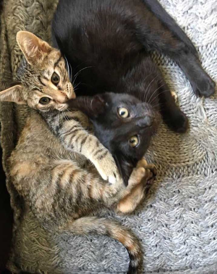 Lulu and Kiki