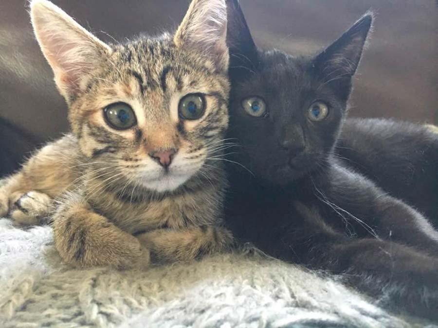 Lulu and Kiki