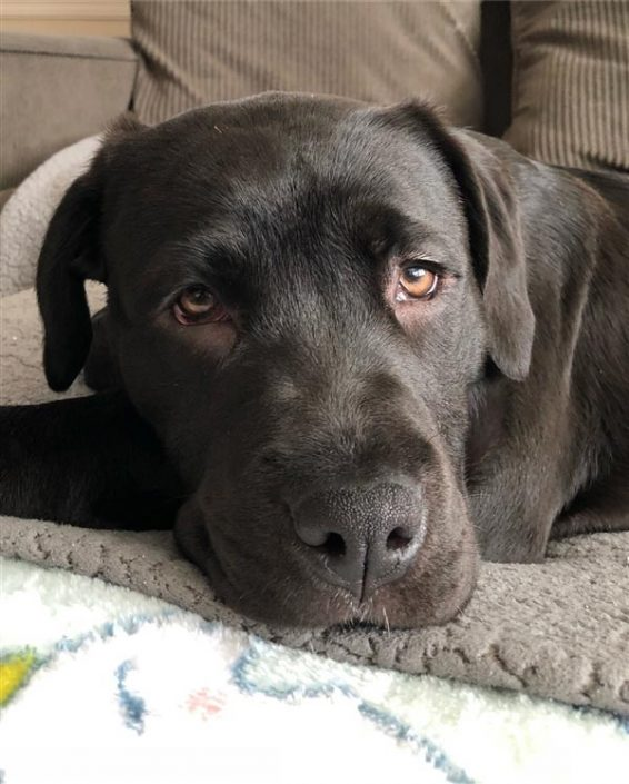 Louise the Cane Corso, Terrier Mix