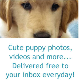 Subscribe to our daily puppy email!