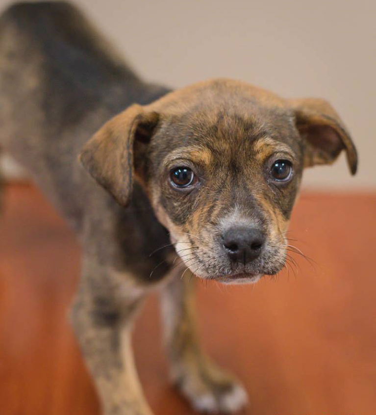 Isabella the Terrier Mix