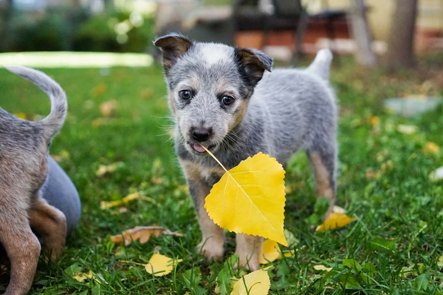 5 Dog Training Products that Are Must-Haves for Dog Parents