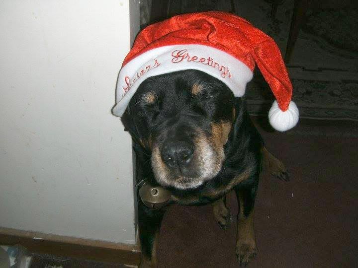 Lady Nakia the Rottweiler