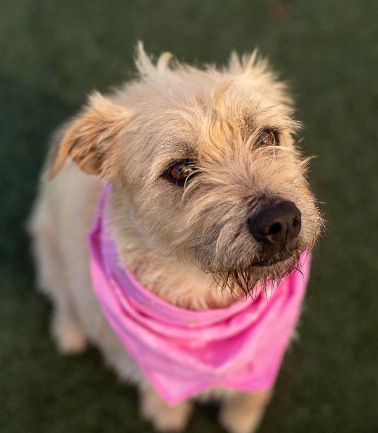 Jewel the Terrier Mix
