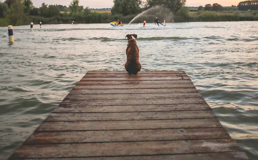 How to Train Your Dog to Accompany You in Your Watersports Experience