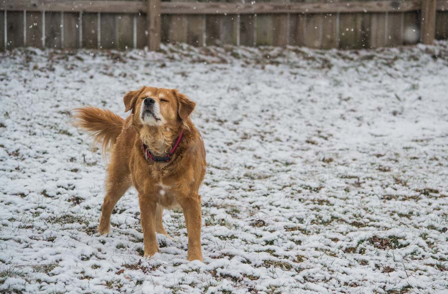 How To Keep a Dog House Warm In the Winter