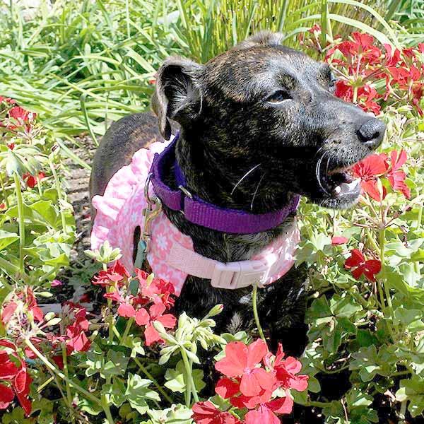 Audrey the Terrier Mix