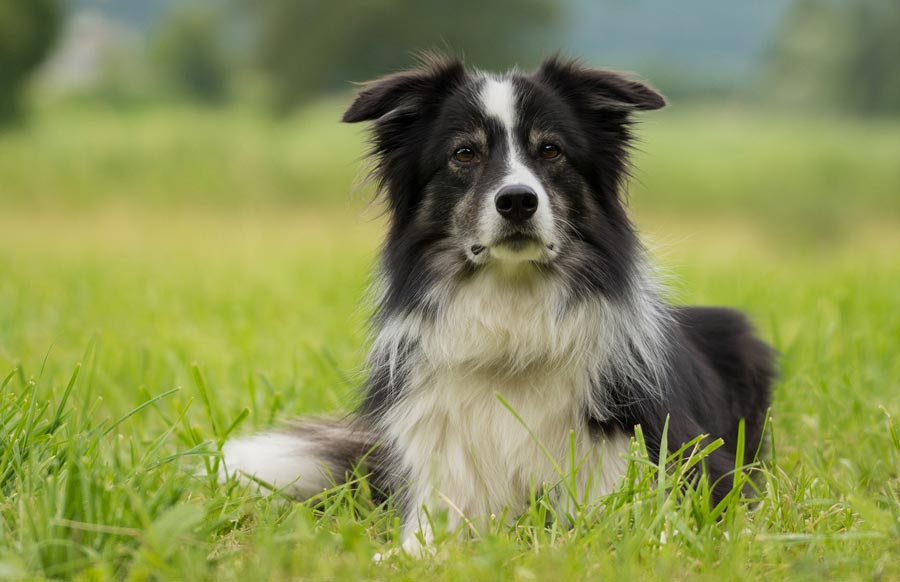 CBD Oil for Dogs: What to Expect Once Your Pet Uses It