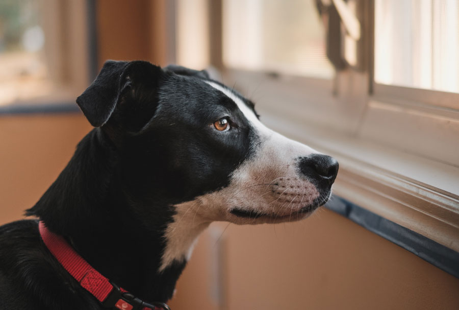 Is Your Air Conditioner Affecting Your Pet's Health?