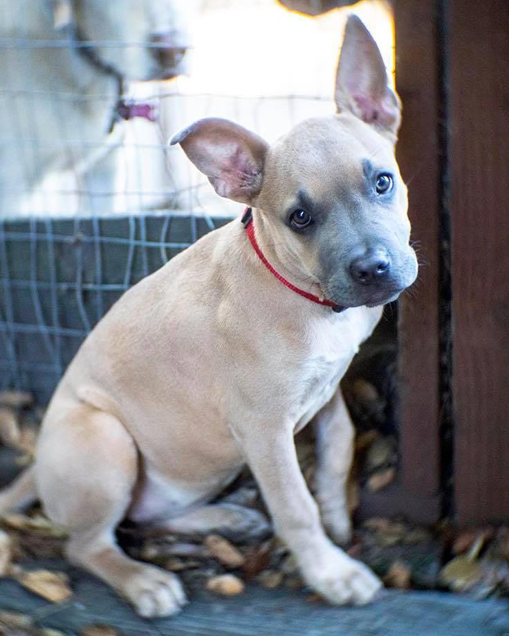 Roxie the Mixed Breed