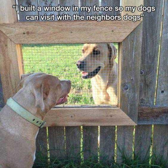 Dog window meme