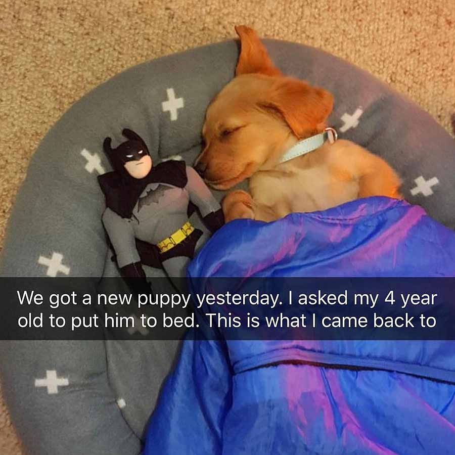 Puppy with Batman in bed meme