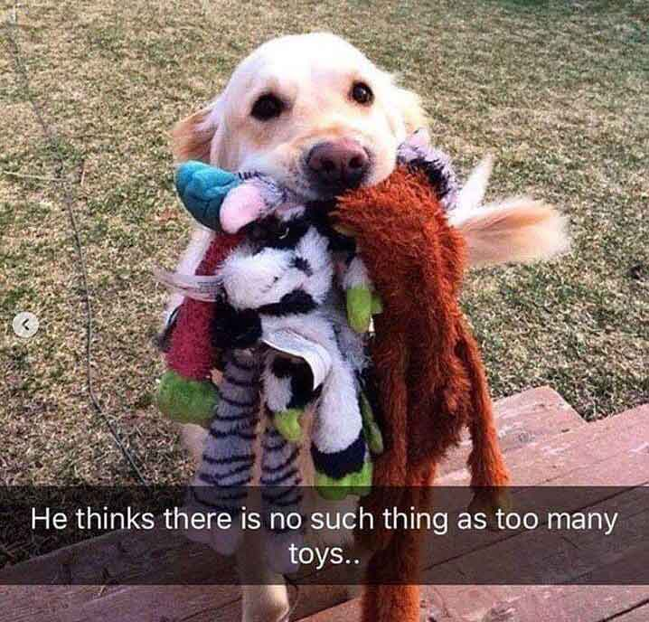 Too many toys dog meme