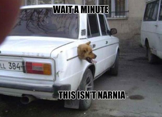 Dog Narnia Meme