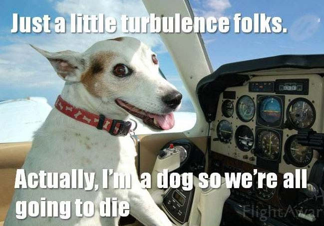 Dog Flying Plane Meme