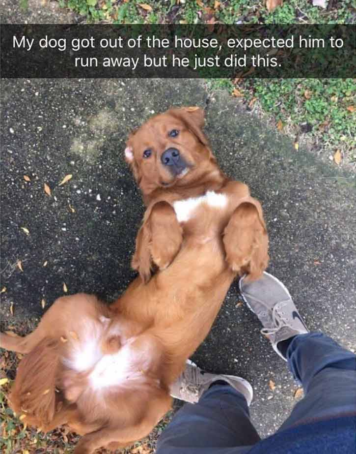 Runaway dog meme