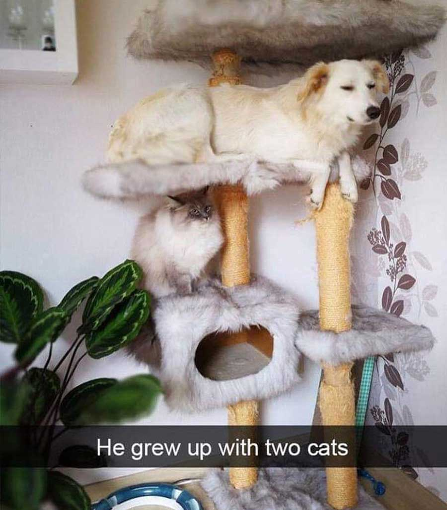 He grew up with cats meme