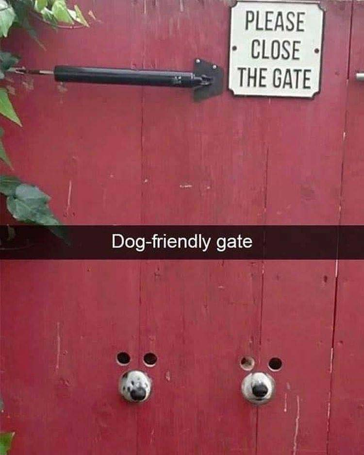 Dog friendly gate meme