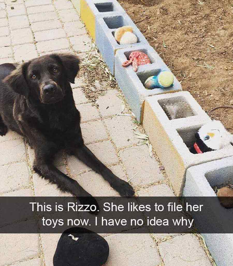 Arranging toys dog meme