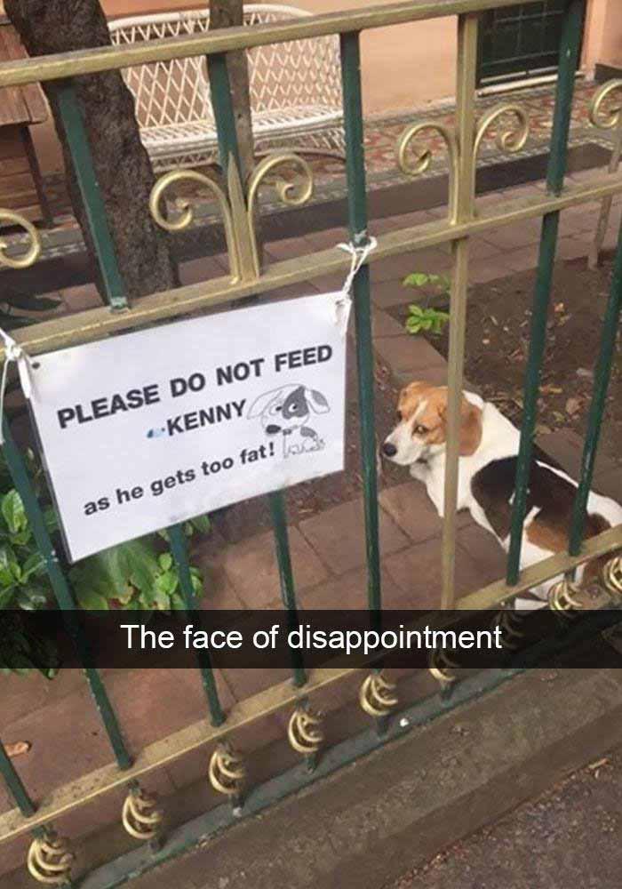 Don't feed the dog meme