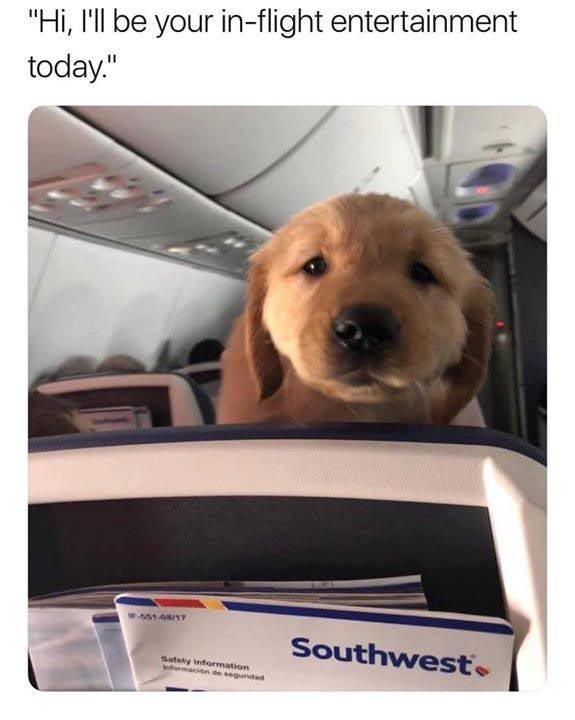 Inflight dog entertainment meme