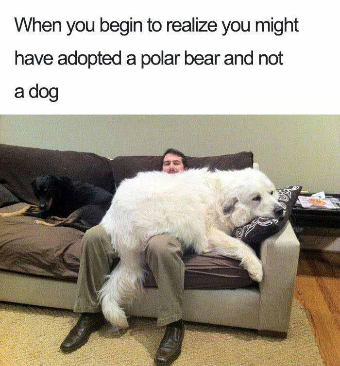 Dog polar bear meme