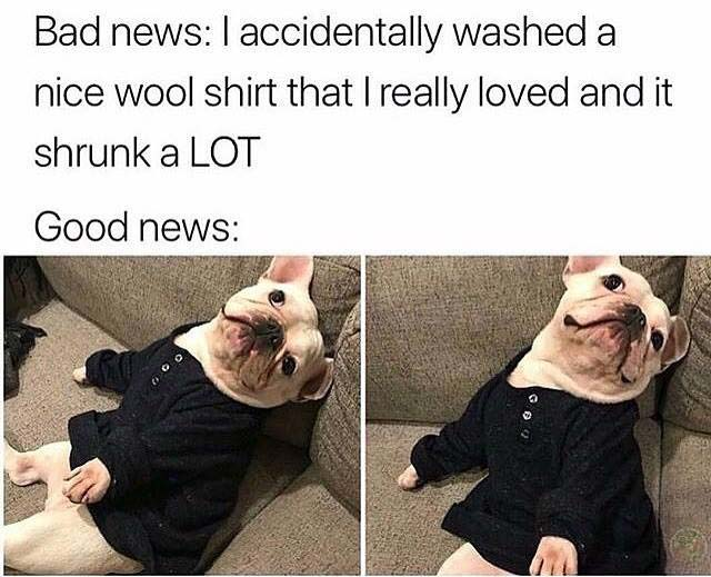 Shrink shirt dog meme