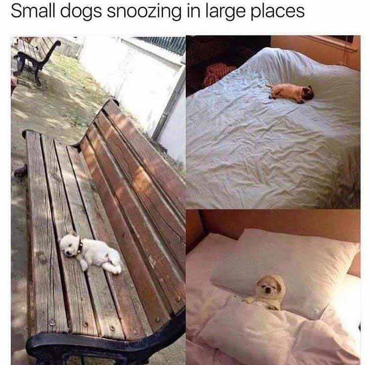 Big place little dog meme