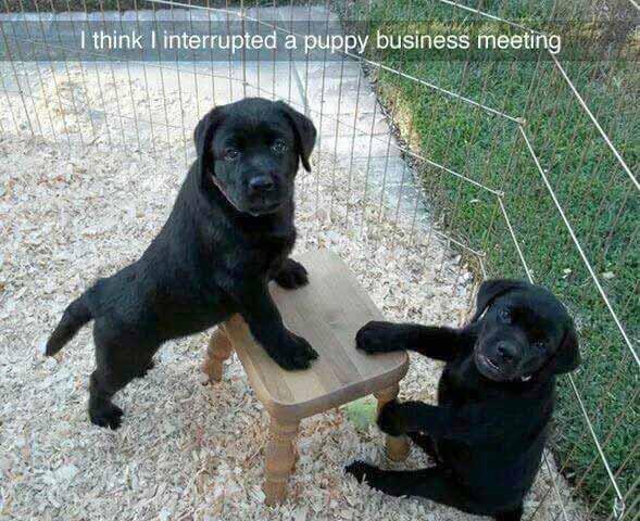 Dog meeting meme
