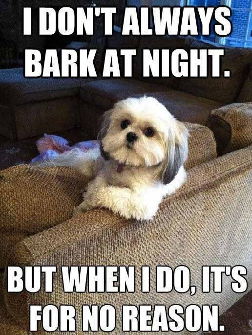 I don't always bark at night meme