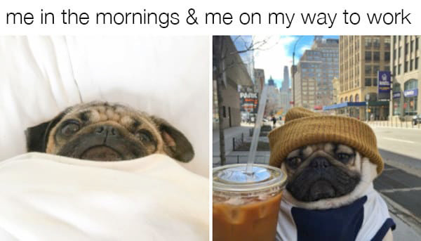 Morning Pug Dog Meme