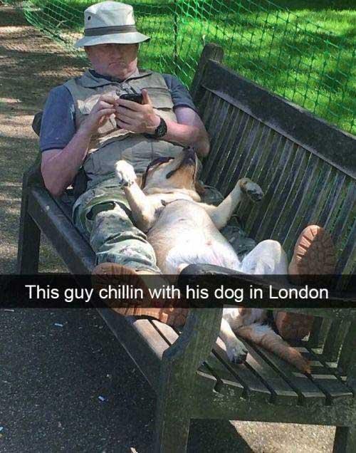 Dog chillin meme