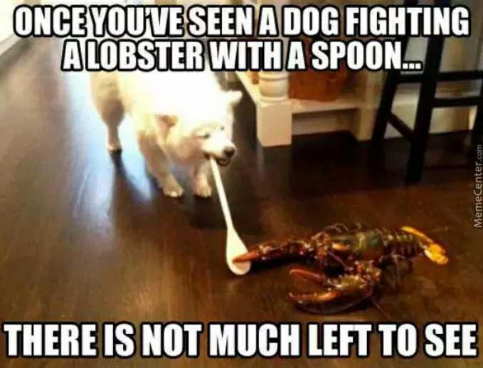Dog Lobster Spoon Fighting Meme