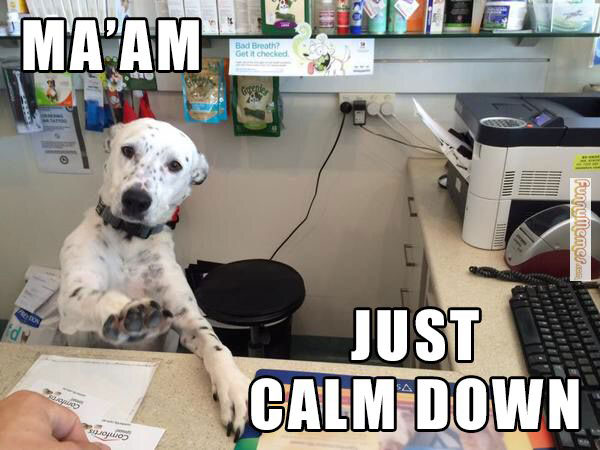 Dog Ma'am Calm Down Meme