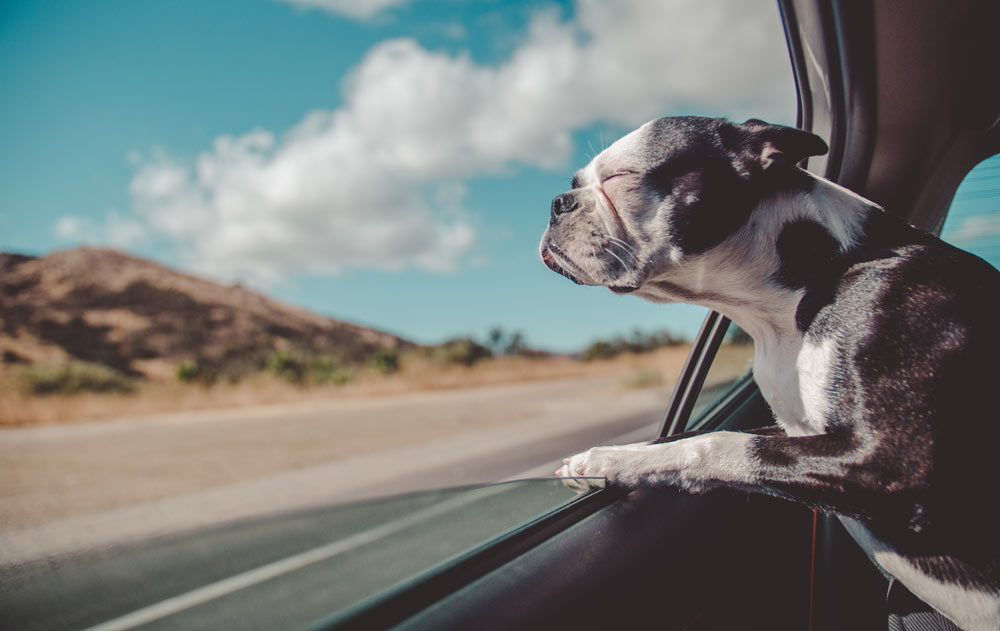 How to Manage Your Pet During Your Move