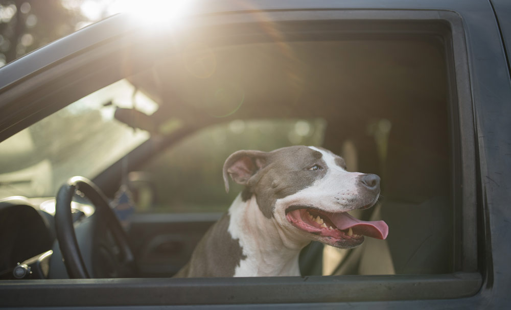 How to Prepare for Your Dog's First Road Trip!